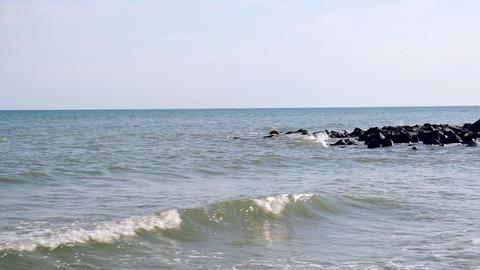 flock of dolphins swim in the distance, Black Sea Ukraine Acción en vivo