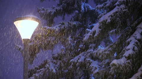 Falling snow on snowy spruce trees and street lamp in city park at winter Live Action