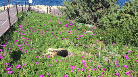 Happy Dog Lies in Flowers Against the Background of Sea Live Action