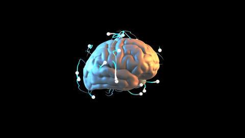 Brain - 3D Animation Animation