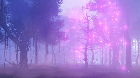 Firefly lights in magical misty forest fantasy animation Live Action