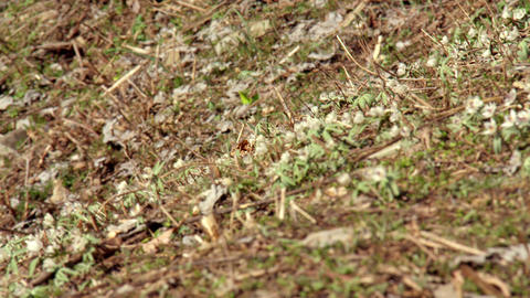 Flowers setsubunsou V1-0025 Footage