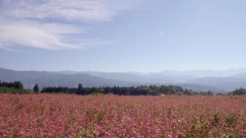 Flowers soba V1-0022 Footage