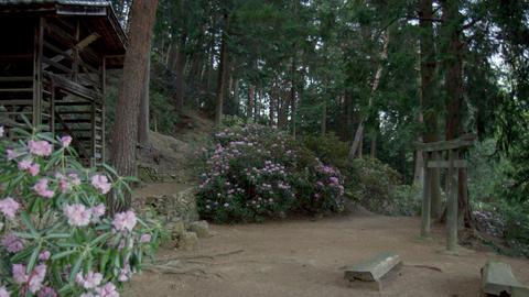 Flowers syakunage V1-0024 Live Action