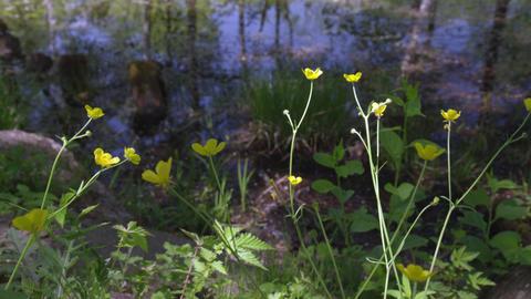 Flowers umanoshigata V1-0004 Footage