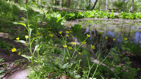 Flowers umanoshigata V1-0008 Footage