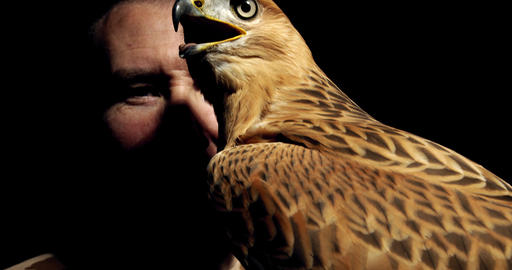 Wild hawk with big eyes and open beak is sitting on its trainers hand, 4k Live Action