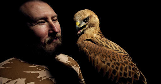 Close up of the wild bird trainer with a wild hawk, stunning predatory bird, 4k Live Action