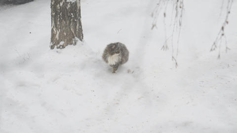 Grey cat sits in the snow during a snowfall, and then leaves Live Action