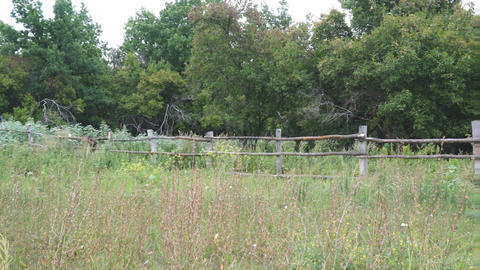 Primitive rustic wooden fence in front of forest Live Action