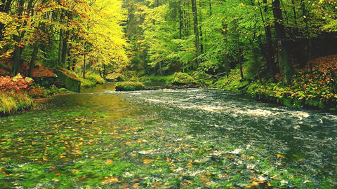 Tilt shift camera footage. Autumn river in deep colorful leaves forest. River in autumn tree at Live Action