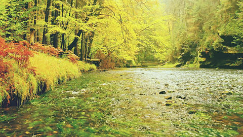 Yellow autumn forest and river. Beautiful autumn landscape, fall season Live Action