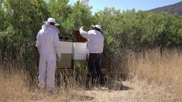 Beehive rural farm two beekeepers check honey 4K Footage
