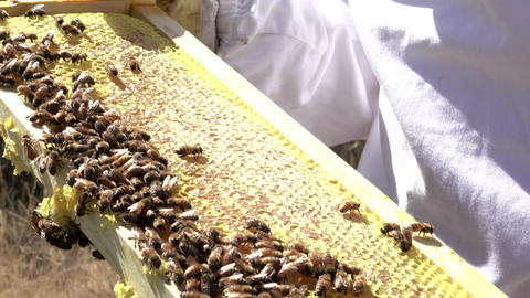 Beekeeper holding honey comb with bees working 4K Footage