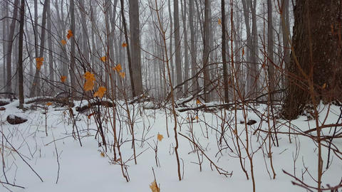 Low Angle View of Forest Floor During Winter Snow. Low Level Angle While Snowing in Woodland Live Action