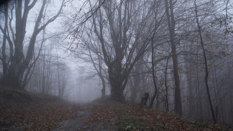 Lonely toursit lost in deep foggy forest reaching forest path Live Action
