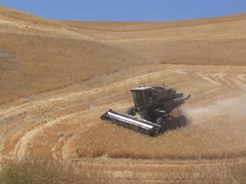 A combine cuts hay in a field Stock Video Footage