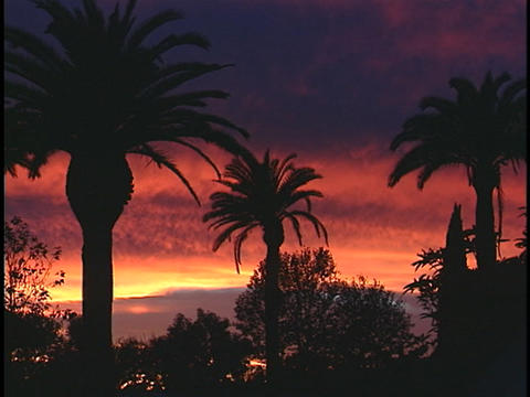 Palm trees stand in silhouette against a vivid tropical sky Stock Video Footage