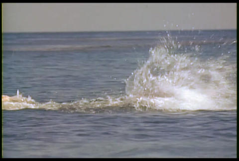 A man swims in the ocean with a fishing boat in th Footage