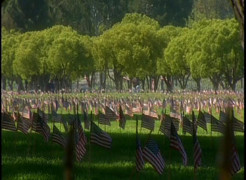 View of a military cemetery with American flags fl Stock Video Footage