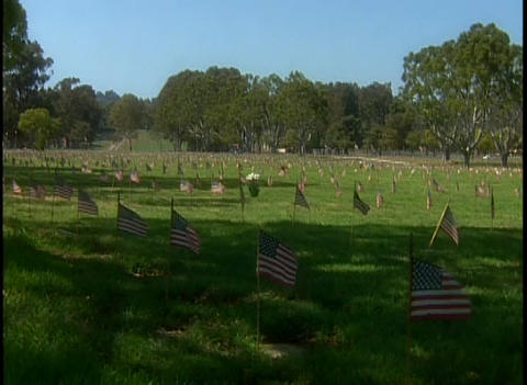 American flags fly in a cemetery Footage