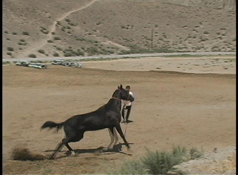 A Young Man Exercises An Akhal-Teke Horse On Sandy Ground stock footage