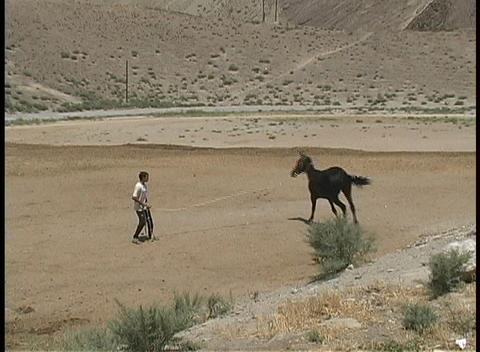 A young man exercises an Akhal-Teke horse on sandy ground Stock Video Footage