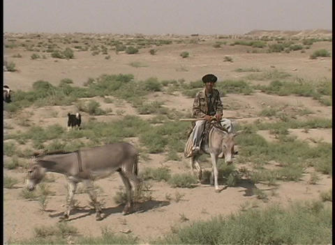 A man rides his donkey to round up his herd of goats Stock Video Footage