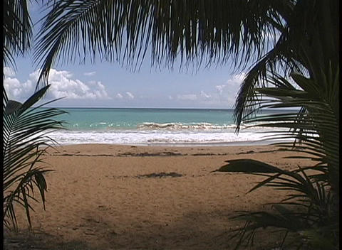 Palm fronds frame a view of gentle waves break on the sands of a Caribbean paradise Footage