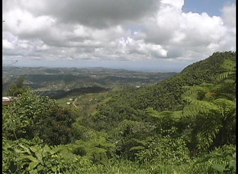 Fluffy white clouds gather above the lush, green Puerto Rican hills Footage