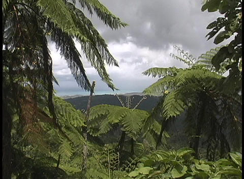 Storm clouds gather above a the Puerto Rican jungle Footage
