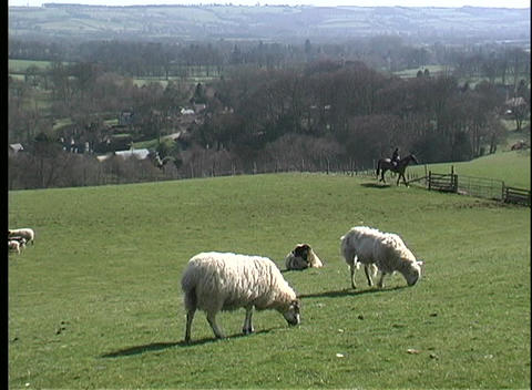 Sheep grazing peacefully are watched by a shepherd on... Stock Video Footage