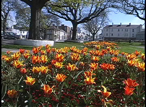 Bright orange flowers decorate a courtyard in northern... Stock Video Footage