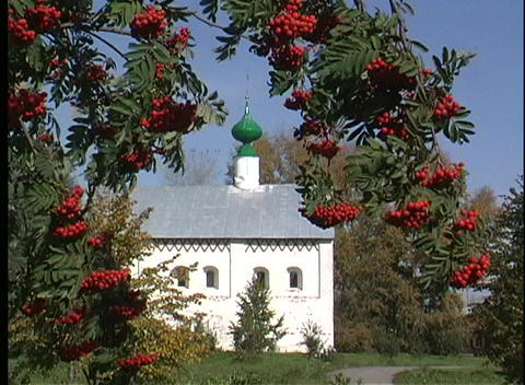 Red berries adorn the tree branches in front of the... Stock Video Footage