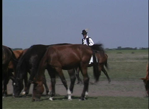 A male, in native costume, rides his horse through a herd of horses in rural Hungry Footage