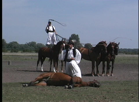 stuntmen wave whips over their heads and the horses they stand above in Hungary Footage