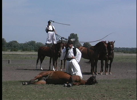 stuntmen wave whips over their heads and the horses they... Stock Video Footage