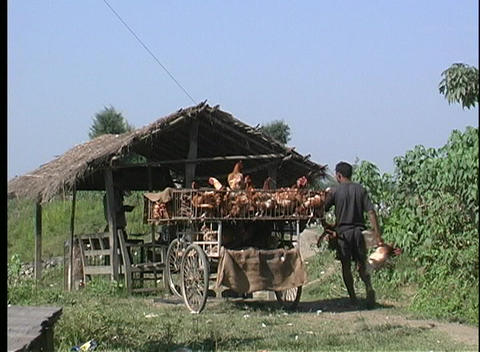 Medium shot of an Asian male loading chickens on a cart... Stock Video Footage