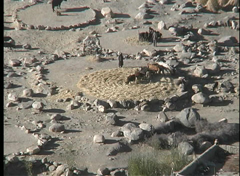 A birds-eye of people and animals working in threshing... Stock Video Footage
