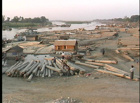 A wide-shot of workers moving logs in Myanmar, Asia Stock Video Footage