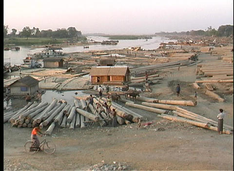 A wide-shot of workers moving logs in Myanmar, Asia Footage