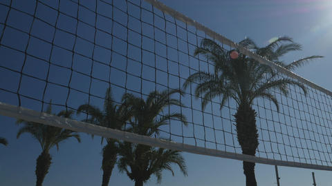 Volleyball net with palms view ライブ動画