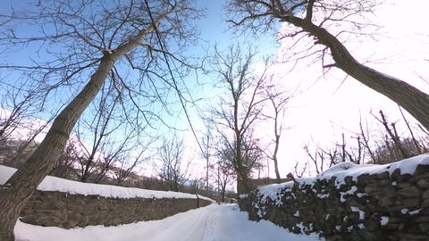 Winter nature of trees and snow ライブ動画