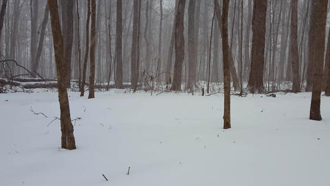 Forest Landscape During Winter Snow Storm With Camera Pan. Snowing Weather in Beautiful Woodland Live Action