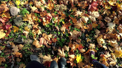 Adult and child legs walking on colorful autumn leaves in park Live Action
