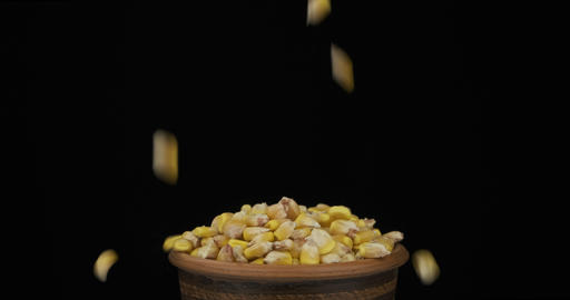 Whole grains of corn fall on a bunch of grains lying in a clay pot and fall out Live Action