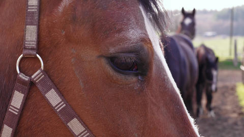 Brown horse sight, animal near other pets in farm paddock Live Action