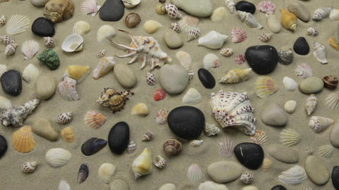 Colorful background of seashells and stones on the sand. Zoom Live Action