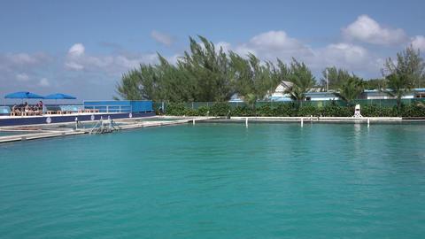 Grand Cayman Caribbean Dolphins captivity tourism 4K Footage
