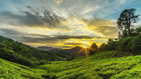 Cameron Highlands Sunrise time lapse at greeny tea farm mountain Footage